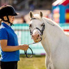 Träna på att visa häst vid hand – digitalt